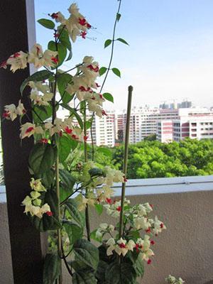Для пышного цветения растению нужен свет