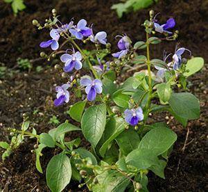 Молодое растение