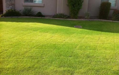 Желтеющий газон