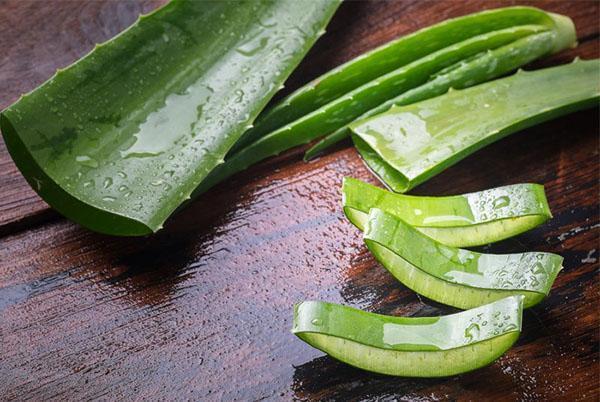 Для получения сока используют листья длинной не меньше 15 см