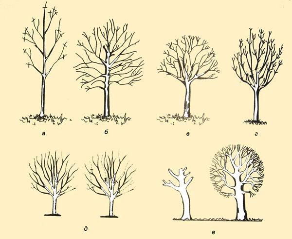Формирование и обрезка деревьев