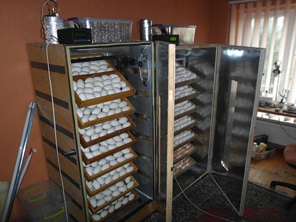 Инкубаторы из холодильников в процессе работы