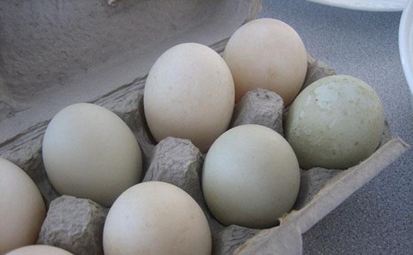 Хранить яйца уток нужно в прохладном помещении