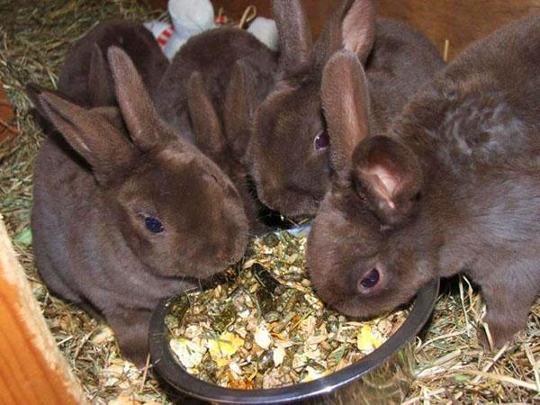 Когда крольчата самостоятельно едят все корма, их отсаживают