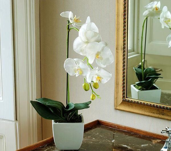 Нежная орхидея в интерьере