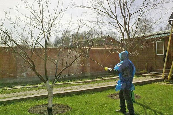 Обработка сада проводится в несколько этапов