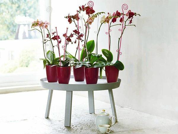 Орхидеи в декоративных кашпо