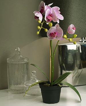 Орхидея в пластиковом непрозрачном горшке