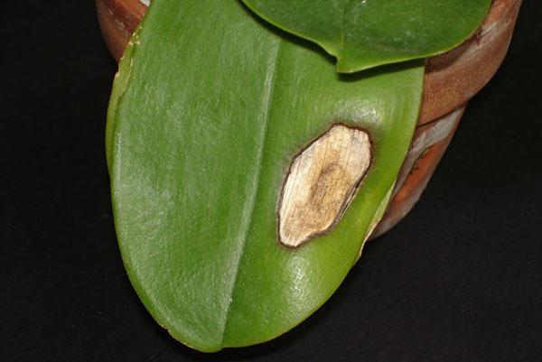 Растение поражено грибковой инфекцией