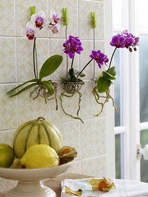 Растут орхидеи без грунта