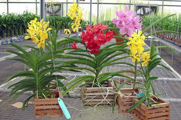 Специальные емкости для орхидеи Ванда