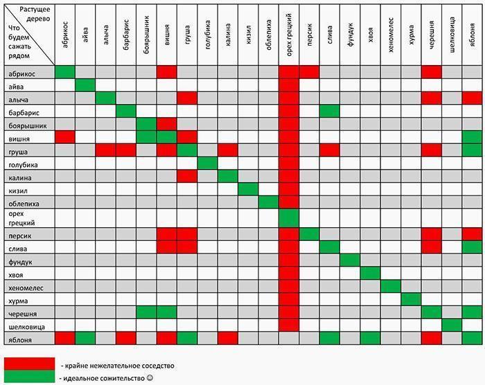 Таблица совместимости садовых насаждений