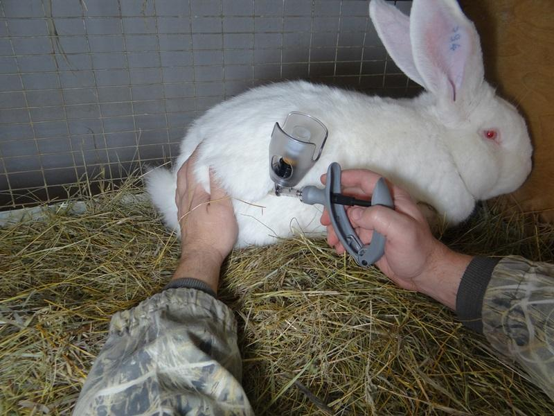 Вакцинация кроликов защитит животных от болезней