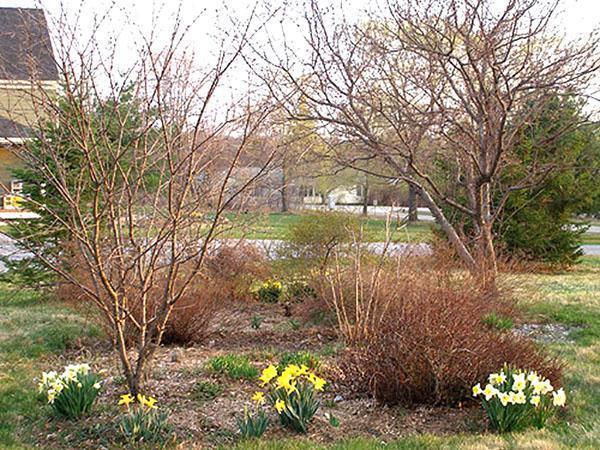 Весенняя обработка деревьев поможет сохранить урожай