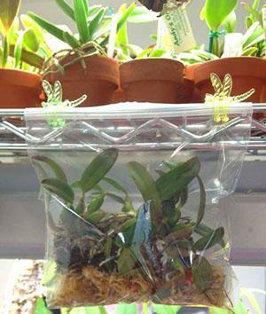Заботливый уход поможет растению нарастить новые корни