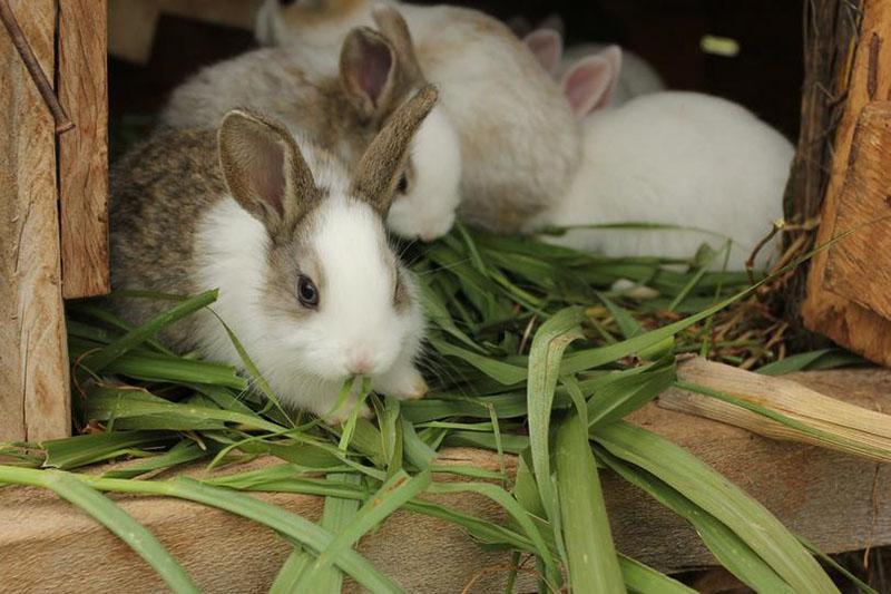 чем кормить кроликов в зависимости от сезона