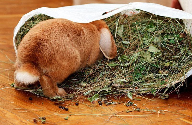 сено в питании кроликов