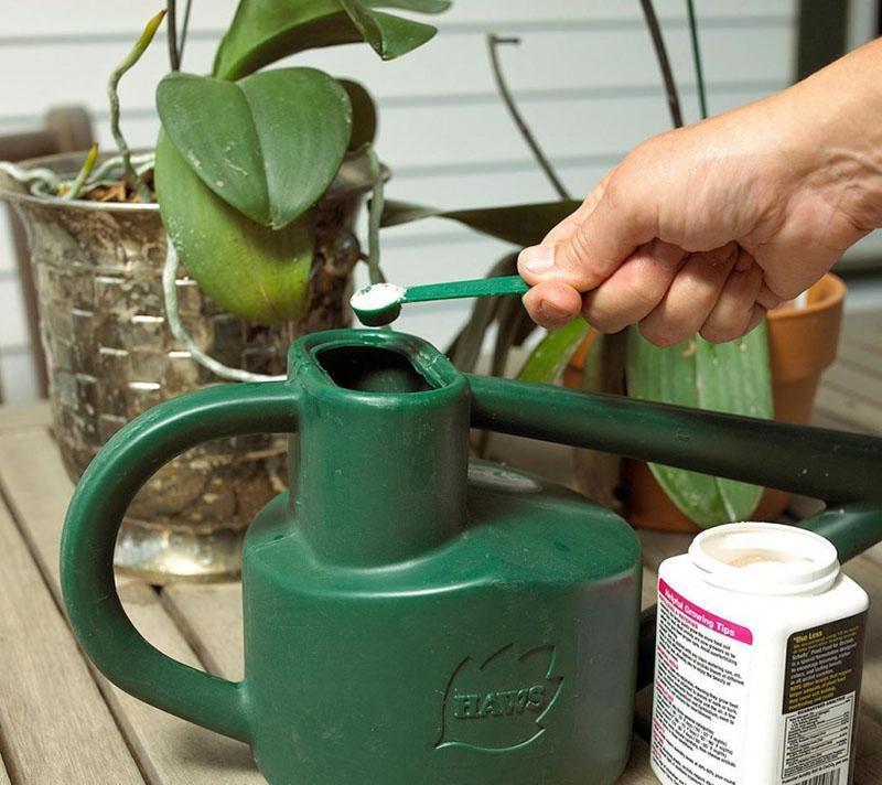 приготовление раствора для полива орхидеи