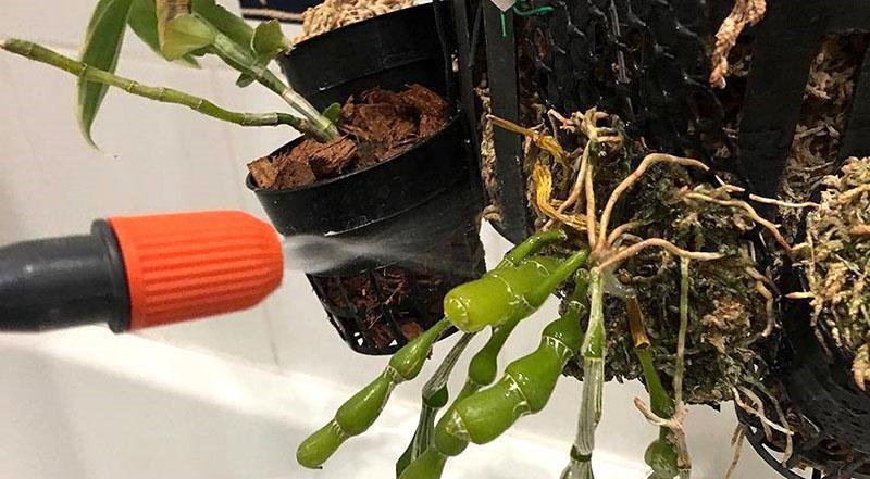 орошение корней орхидеи