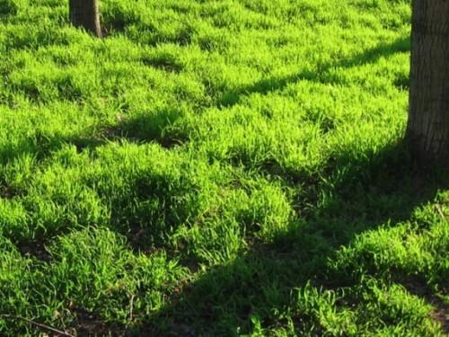 Неровный газон