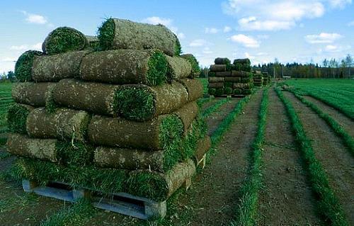 свеже срезанные рулоны газона