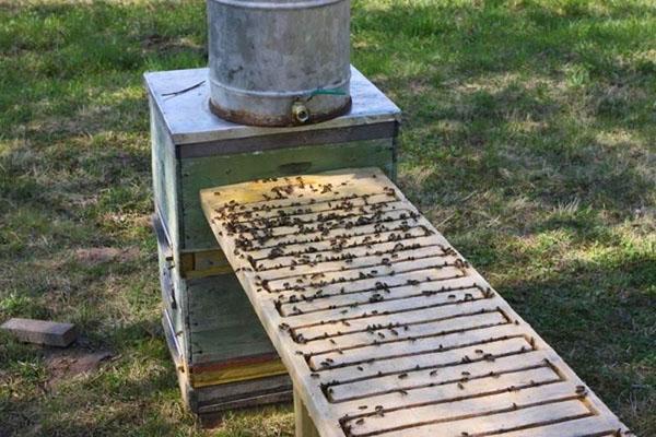 Большая поилка для пчел