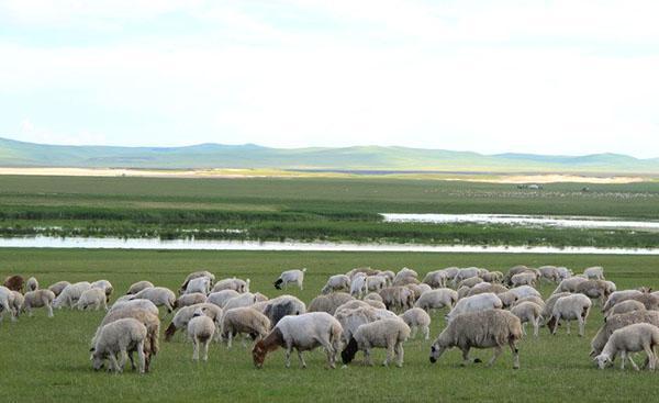 Для развития овцеводческого бизнеса необходимо иметь места для выпаса стада