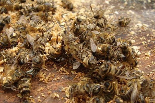 Из пчелиного подмора делают отвар, настойку, крема