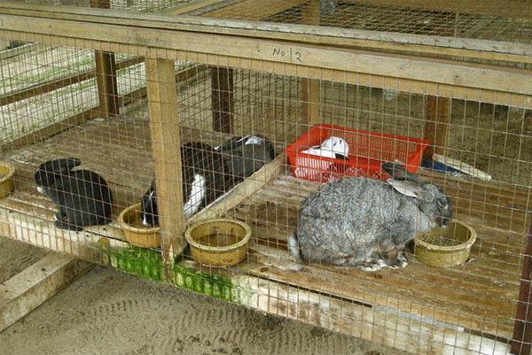 Комбикорм является важной составляющей в выращивании кроликов