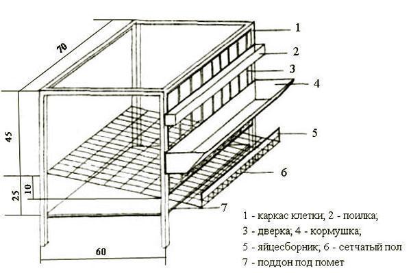 Конструкция клетки для содержания несушек