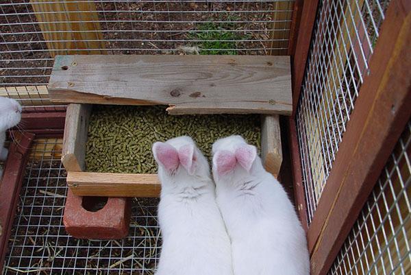 Кормление кроликов комбикормом
