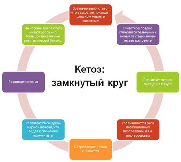 Определение кетоза