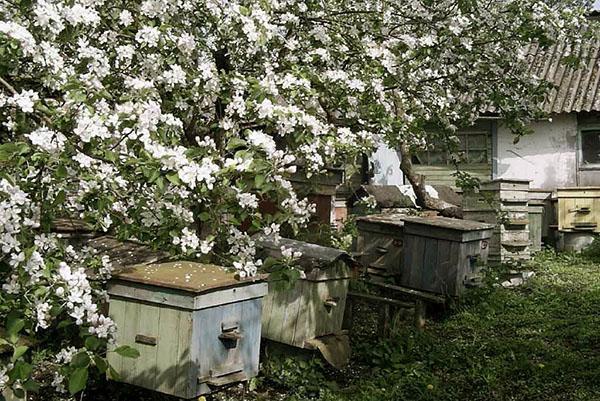Пасека весной