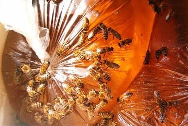Пчелы едят сахарный сироп