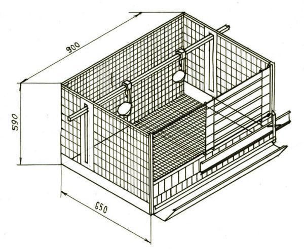 Схематическое изображение клетки для пары несушек