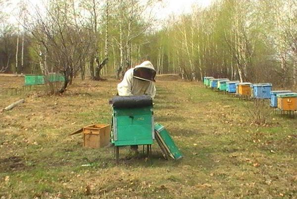 Стимуляция пчел на вылет