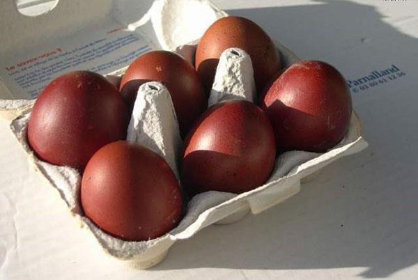 Яйца кур Маран