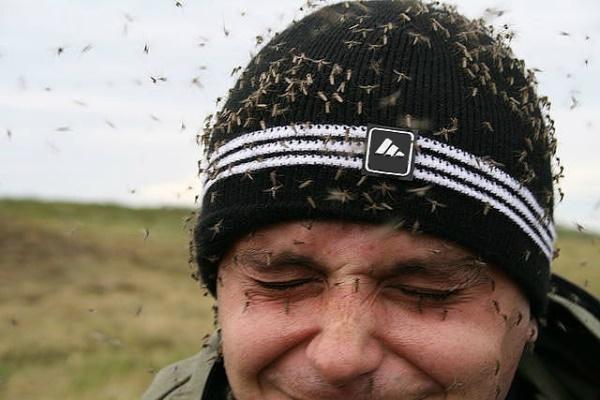 Комары атакуют человека