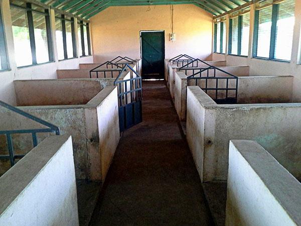 Чистое комфортное помещение для свиней
