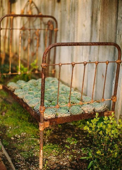 Клумба-кровать из молодила