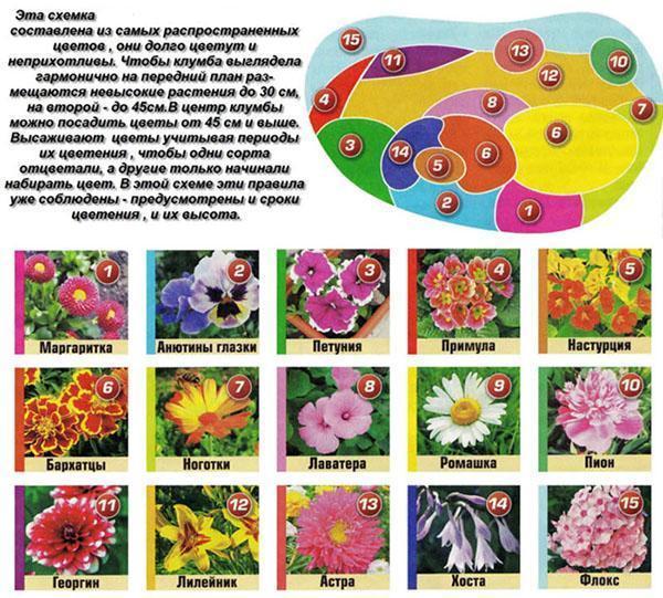 Схема клумбы из распространенных растений