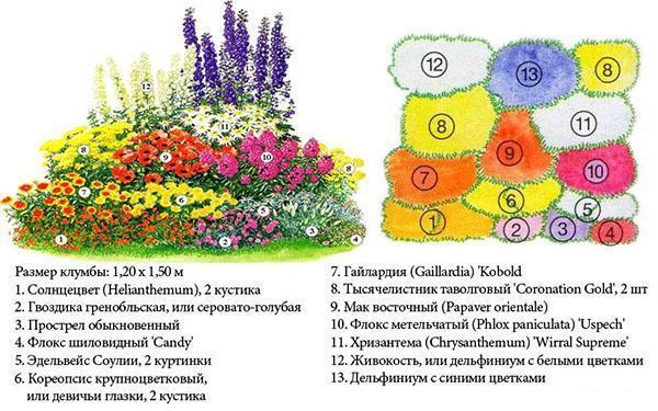 Схема цветника №2