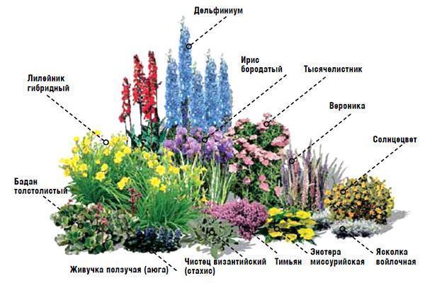 Схема цветника №3