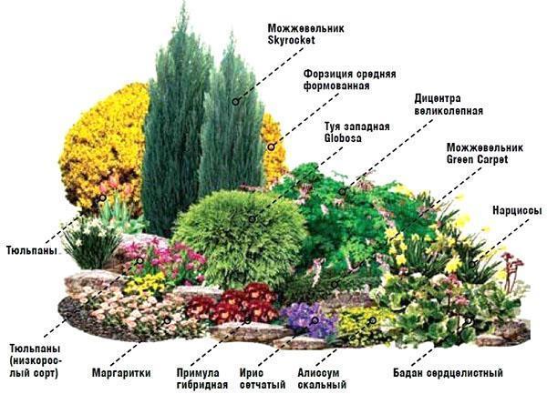 Схема цветника №4
