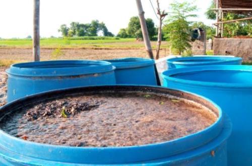 Экологически чистое удобрение - коровяк