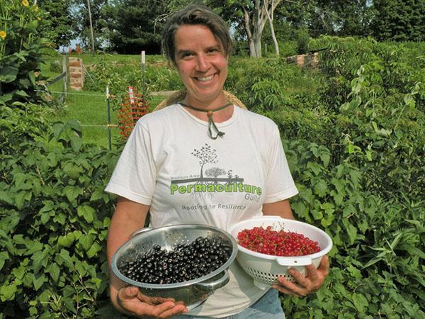 Урожай красной и черной смородины