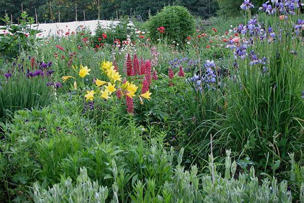 Внесенные весной удобрения гарантия пышного цветения многолетников