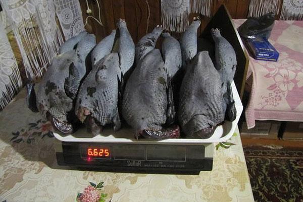 тушки китайской курицы