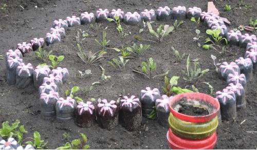 клумба-цветок