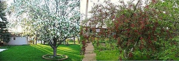 шпанка весной и летом